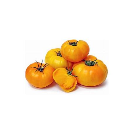 Plant de tomate Yellow Brandywine