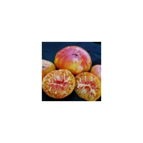 Plant de tomate Ananas